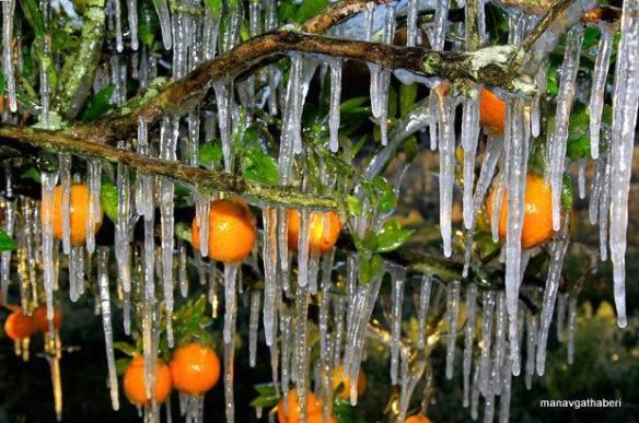 Fruchteis - Kerstin Klinder 10.01.2015